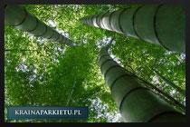 Budowa i struktura bambusa
